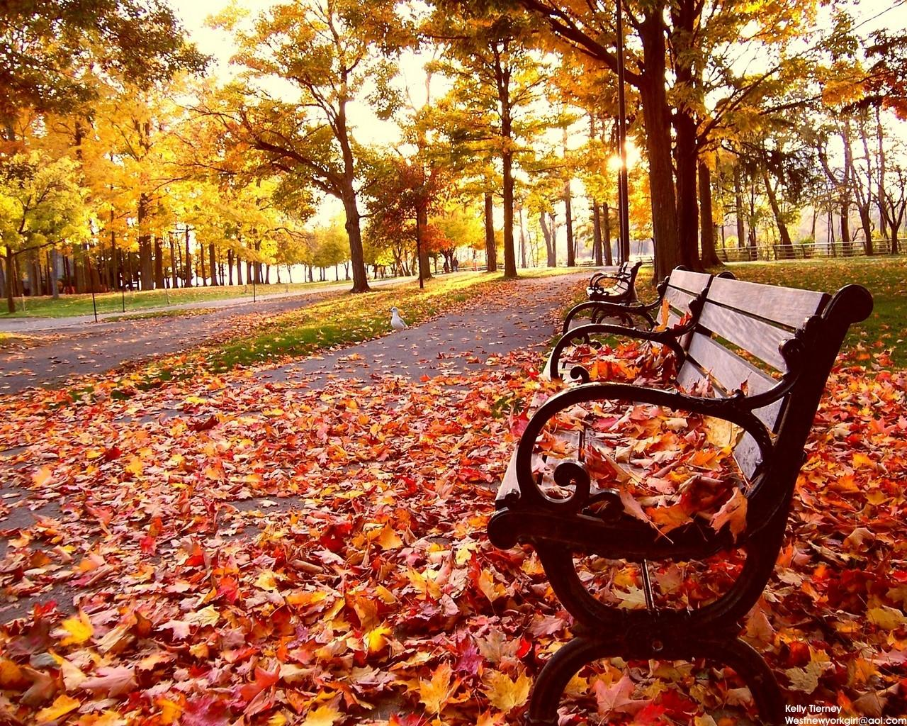 Park Bench In Autum